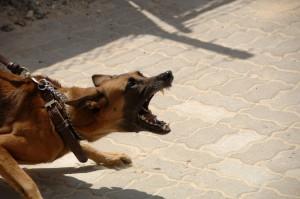 Dog aggressive